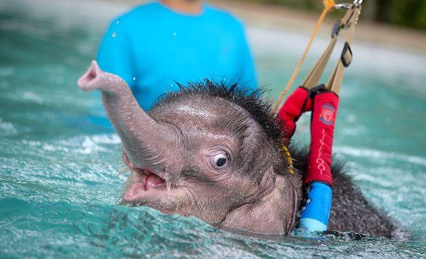 Ensimmäisillä uintikerroilla Fah Jam on ollut melko pelokas.