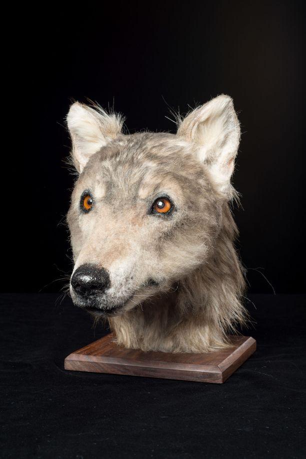 Koiran pääkallosta tehtiin malli 3D-tulostimella.