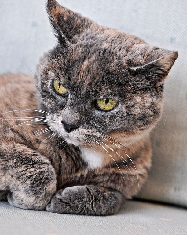 Rontti-kissa oli alunperin Tarja Halosen tyttären kissa.