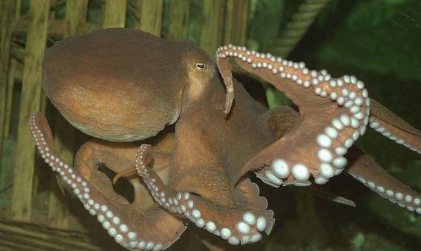 Asiakkaat voivat merkitä seurantalomakkeille mustekalan käytöstä.