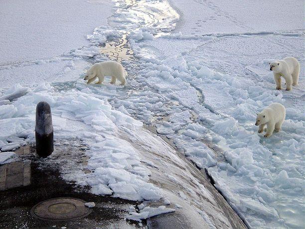 Normaalisti jääkarhut elävät Pohjoisella jäämerellä, tässä ne ovat tulleet ihmettelemään ydinsukellusvenettä.