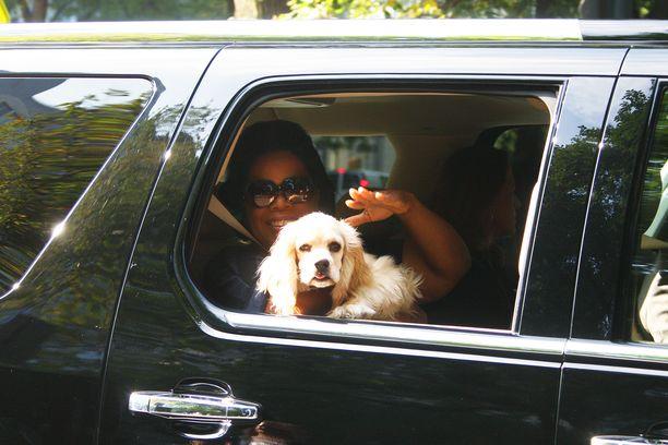 Oprah on koiraihminen henkeen ja vereen. KUVA: AOP