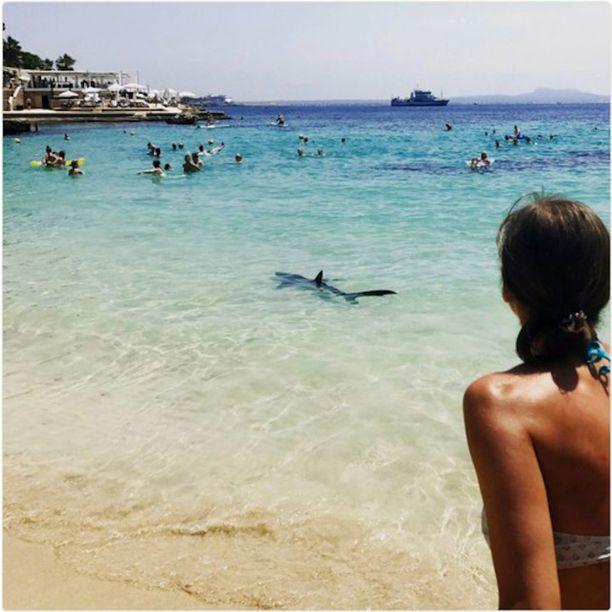 Turistit ihmettelivät kutsumatonta vierasta Mallorcalla Espanjassa.