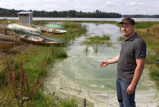 Haapajärven rannoille kerrostuva ja kuoleva levä aiheuttaa kammottavaa löyhkää.