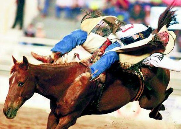 """KYLMÄÄ KYYTIÄ Jotkut hevoset saattavat innostua liikaa, kun niitä patistaa Tapio Rautavaaran tapaan laulamalla """"huputiti hummani hei"""". Tämän sai havaita kuvan cowboy Brasiliassa järjestetyssä rodeossa."""