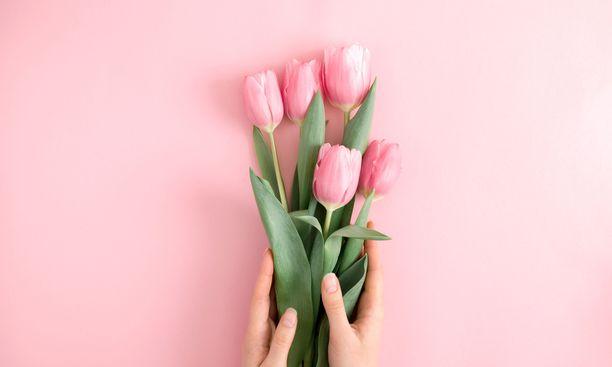 Tulppaanit kuuluvat kevätsisustukseen.