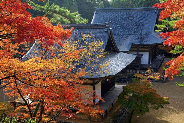 Kioto on syksyllä huikaisevan kaunis.