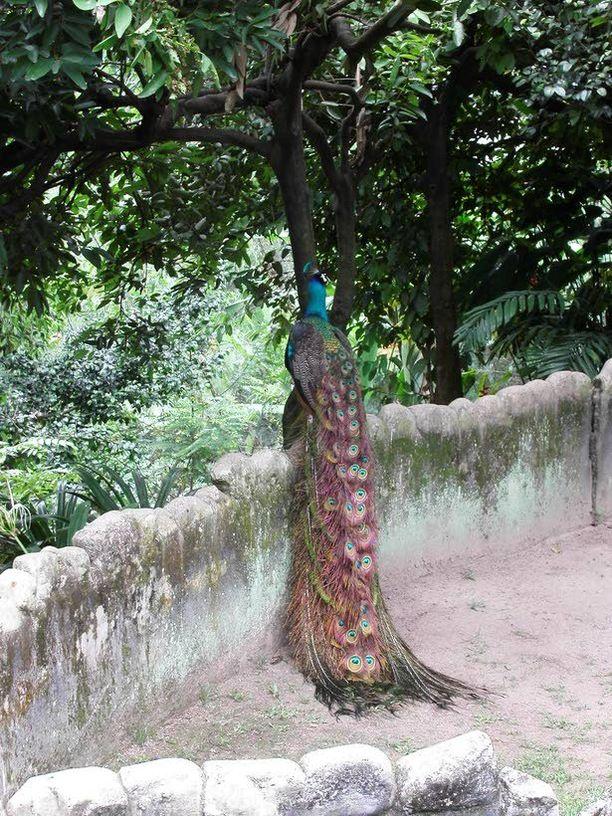 Bird Parks sijaitsee keskustassa.