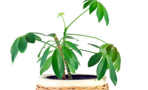 Kasvi tarvitsee sopivan mullan kukoistakseen.