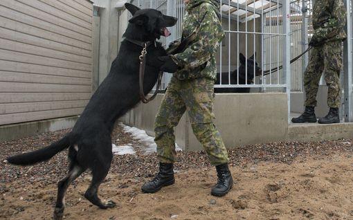 Naiskersanttia nöyryytettiin Porin prikaatissa, määrättiin kontilleen koiraksi