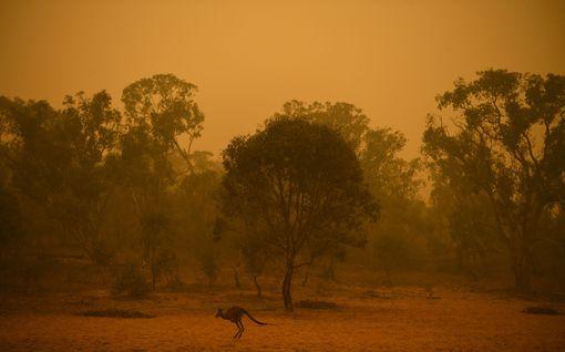 Vauraaseen Australiaan virtaa miljoonakaupalla rahaa palojen sammuttamiseksi – julkkiksilta suuria lahjoituksia