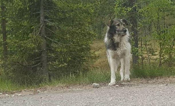 Etsijät luottavat ja toivovat, että Herra Koira saadaan kiikkiin ajoissa.