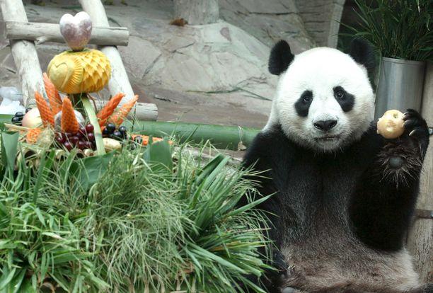 Chuang Chuang piti palauttaa Kiinaan 2023.