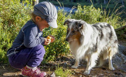 Lemmikin kanssa puuhastelu kehittää lasta.