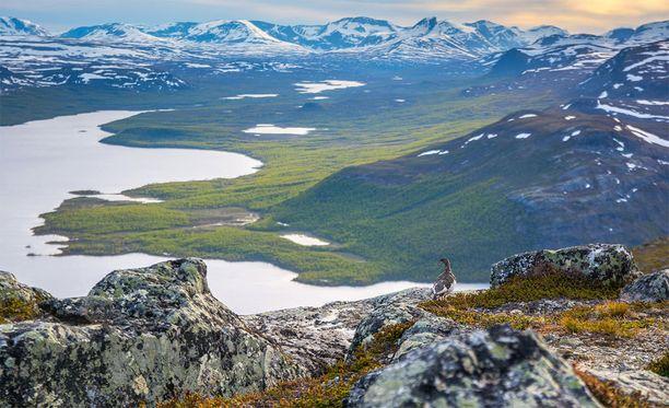 Vuoden luontokuvan on ottanut Juha-Pekka Paananen.