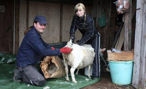 Villellä ja Johannalla on lampaita.