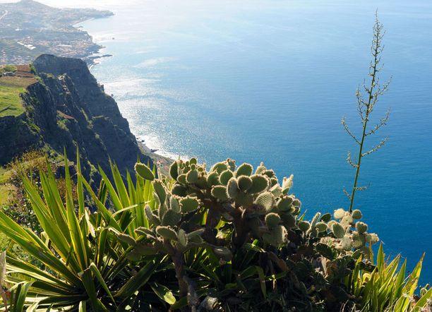 Madeiran maisemat ihastuttavat vehreydellään.