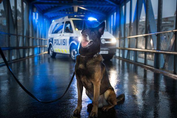 Vinha on Vuoden poliisikoira 2020.