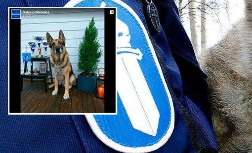 Työ oli koiralle myös harrastus, vuonna 2013 Roima voitti virkahuumekoirien SM-kisat, kertoo Oulun poliisi.