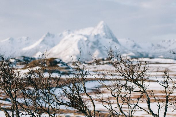 Himari ehti seurata kaikkien vuodenaikojen vaihtumisen Gisløyalla.