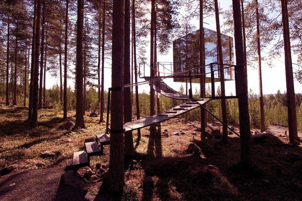 Tree House -hotellin jokainen huone on yksilöllinen puumaja.