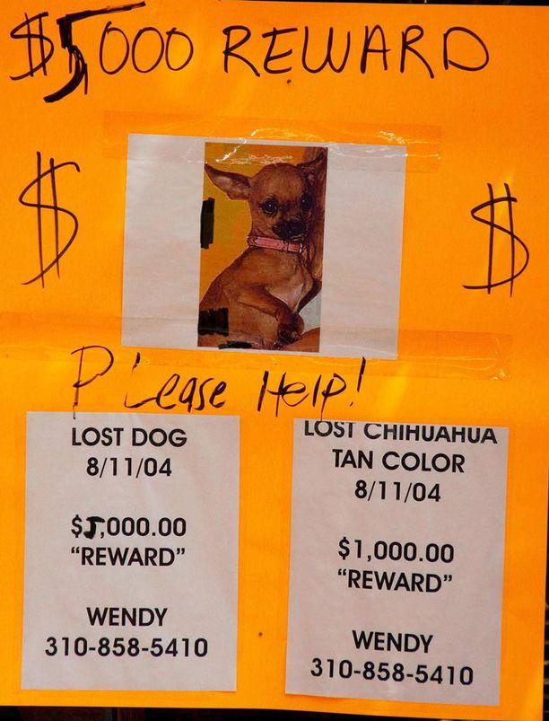 Varastettu lemmikki palautettiin, kun siitä luvattiin 5000 dollarin palkkio.