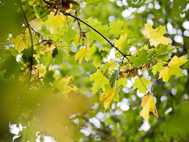 Kuluvalle viikolle luvassa kauniita syysulkoilukelejä. Kuva Helsingistä 1. lokakuuta 2013. Silloinkin sää oli varsin kaunis.