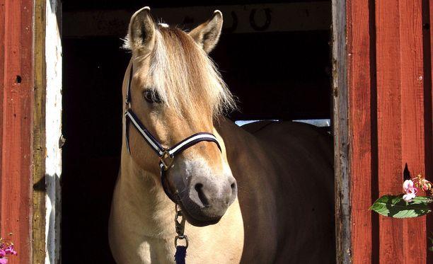 Eläimiin sekaantuminen on Ruotsissa rikos. Kuvan hevonen ei liity tapaukseen.