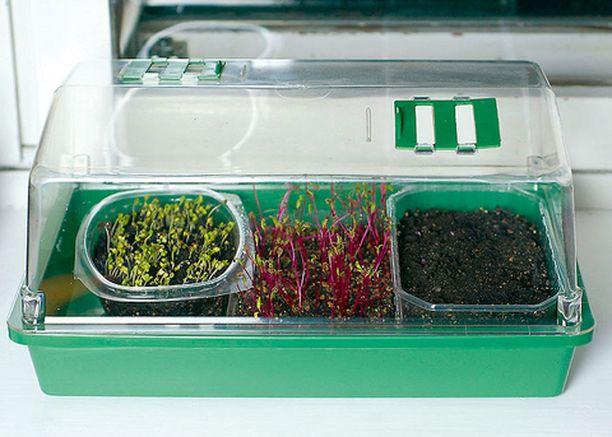 Minikasvihuone säilyttää versojen kosteuden ja pidentää kasteluväliä.