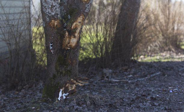 Nuoret miehet kuolivat moottoripyörän törmättyä puuhun Kotkassa.