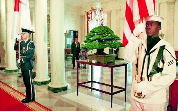 KIVA LAHJA Yhdysvaltojen valiosotilaat varmistavat, että valkoisen talon sisäkkö ei unohda kastella japanilaisten vuonna 1976 lahjoittamaa Bonsai-puuta, joka on kaivettu esiin jostain komeron nurkasta Japanin pääministerin vierailun ajaksi.