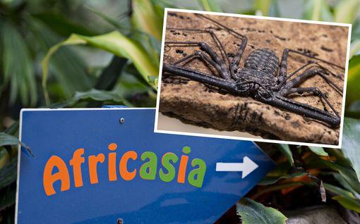 Korkeasaaressa vipeltää skorpionilukkeja vapaana