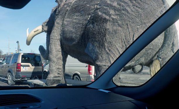 Muistatko vielä taideteos ja maskotti Veeti-mammutin? Nyt liikenteeseen tulevat mammutit eivät ole samanlaisia, mutta isoja nekin.