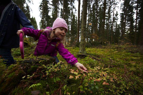 Metsäretki tarjoaa ilmaisia elämyksiä.