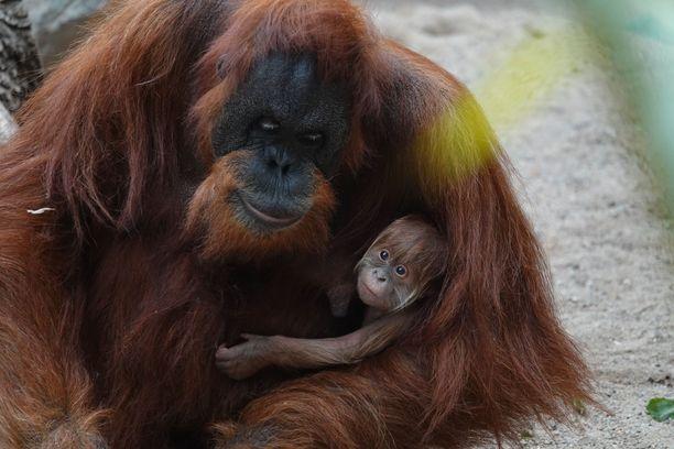 Toba pitää hellästi pienokaisestaan huolta.