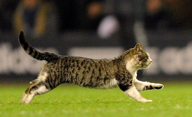 Kentälle juossut kissa on noussut jo nettijulkkikseksi.