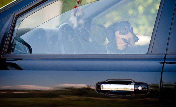 Lemmikin jättäminen kuumaan autoon on eläinsuojelurikos.