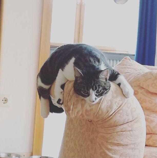 Kikki kasvoi nopeasti osaksi perhettä ja viiden muun pelastetun kissan laumaa.