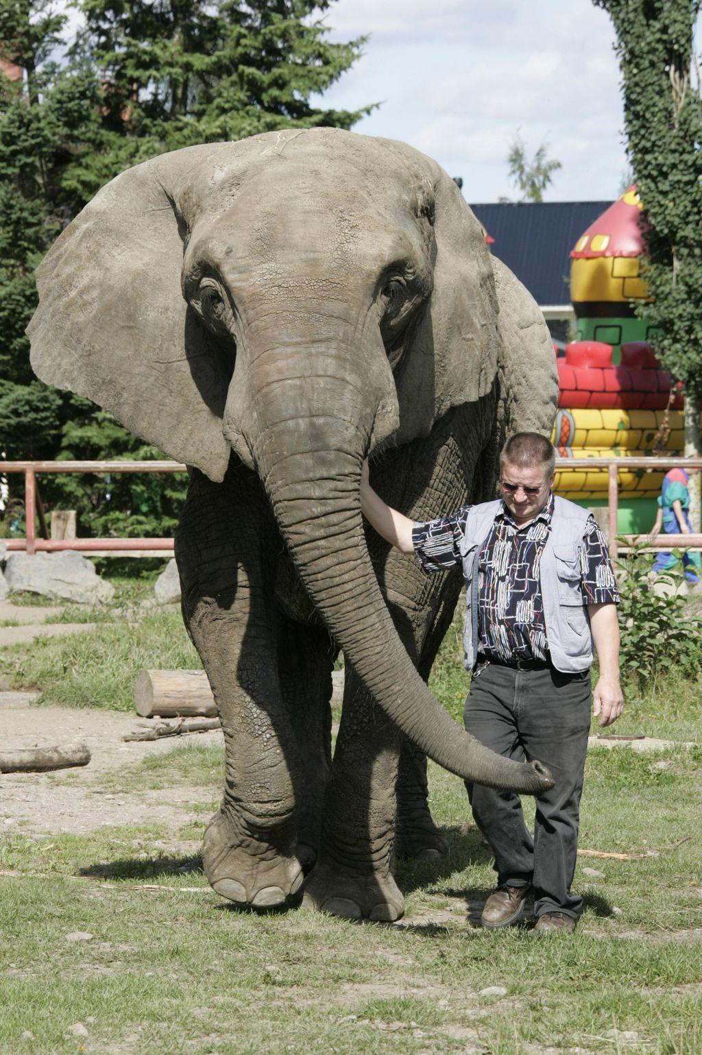 Vanni eli elämänsä sirkuksissa ja eläintarhoissa. Viimeisen elinvuotensa aikana se muutti Liedosta ukrainalaiseen eläintarhaan.