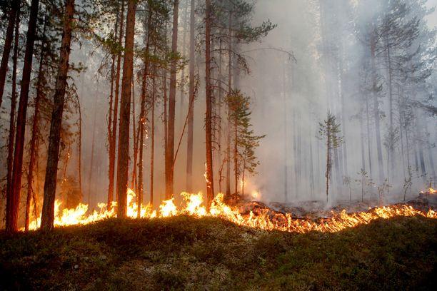 Metsäpalot raivoavat eri puolilla Ruotsia.