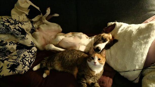 Ritan perheessä kissat olivat jo tottuneet koiriin ennen kuin perheeseen liittyi pentukoira.