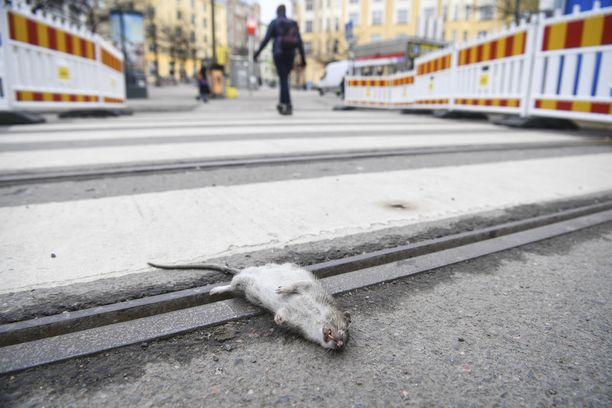 Rotat ovat ongelma Helsingissä, mutta monella muullakin paikalla, käy ilmi Iltalehden lukijoiden vastauksista.