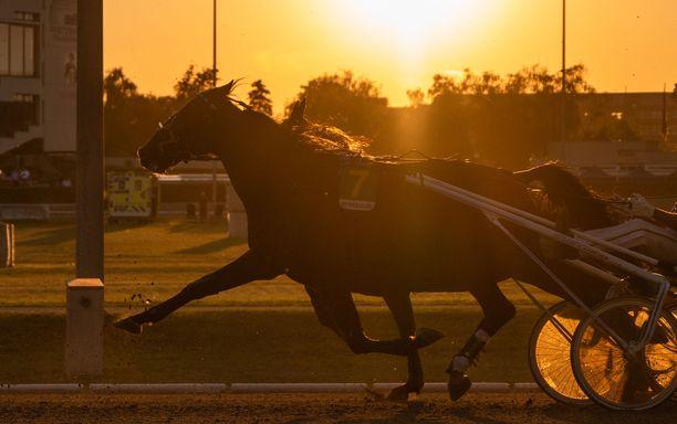 Hevosurheilun selvityksen mukaan lajin parissa tapahtuu seksuaalista ja sukupuoleen perustuvaa häirintää. Kuvituskuva.