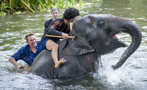 Thaimaassa sijaitseva Elephant's World kertoo olevansa sairaiden, vanhojen, pahoinpideltyjen ja pelastettujen norsujen turvapaikka. Huomio kiinnittyy kuitenkin norsun ohjaajan keppiin, jossa on piikkikärki. Väline on nimeltään ankus. - On syytä suhtautua varauksellisesti kaikkiin paikkoihin, joissa norsunajajalla on ankus mukana, neuvoo Helena Telkänranta.