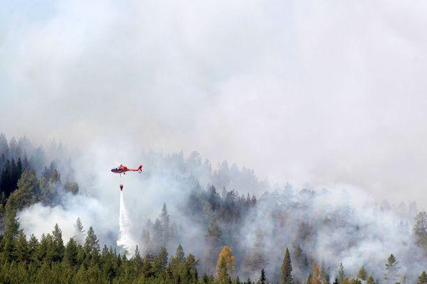 Helikopteri sammutti metsäpaloja viime viikon alussa Hammarstrandissa Pohjois-Ruotsissa.
