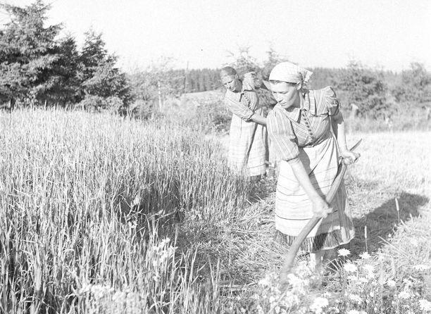 Veteraanijärjestöt muistuttavat, että sota-aikana naiset kannattelivat yhteiskuntaa ja tekivät valtaosan töistä niin maatiloilla kuin tehtaissa. Kuvassa naisia niittämässä tuorerehua jossain päin kotirintamaa jatkosodan alussa 1. heinäkuuta 1941.
