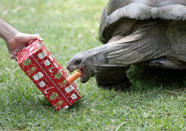 Kilpikonnat ilahtuivat joulutervehdyksistä.