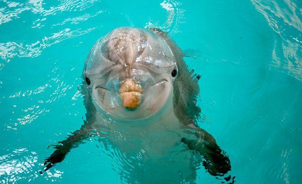 37-vuotias Delfi kuoli keskiviikkona 25. tammikuuta Attica Parkin eläinpuistossa sydänongelmien vuoksi.