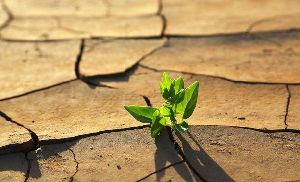 Ilmastonmuutokset myötä kuivat alueet kuivuvat entisestään.