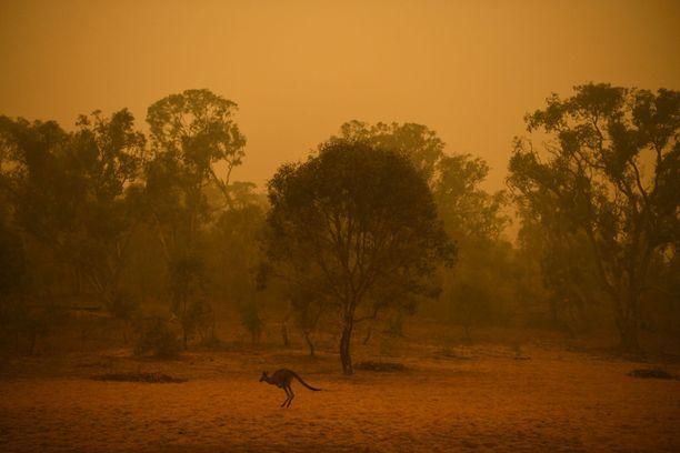 Australiassa vuosi 2019 oli mittaushistorian kuumin ja kuivin. Se pahensi Maailman ilmatieteen järjestön mukaan maan maastopalokatastrofia.